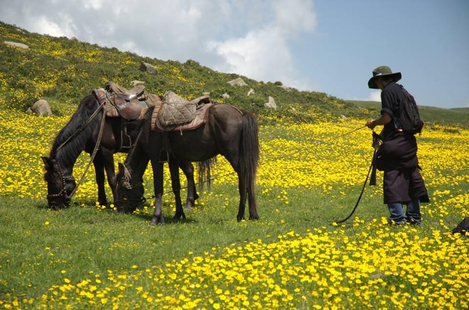 Blog_Horse journey on the grassland_1.jpg