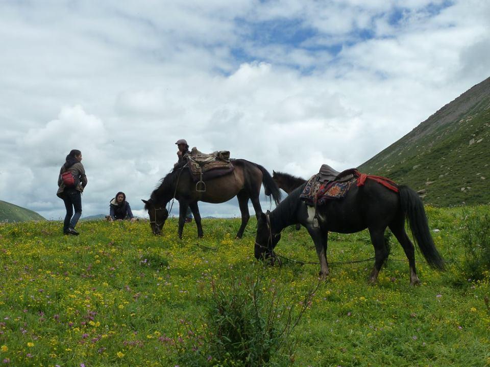 Blog_Horse journey on the grassland_4.jpg