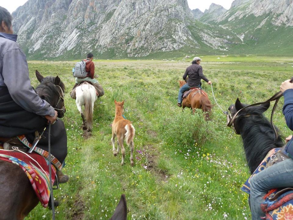 Blog_Horse journey on the grassland_5.jpg