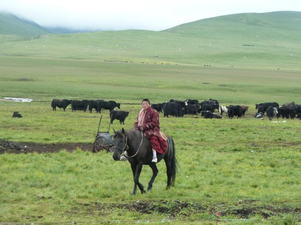 Blog_Horse journey on the grassland_7.jpg