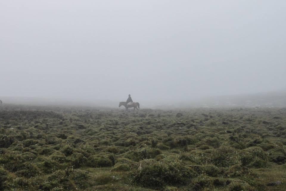 Blog_Horse journey on the grassland_8.jpg