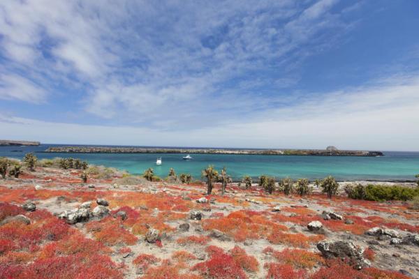 Central & East Islands - A 4 Day Cruise aboard Galapagos LegendDates 2018: Jul 16 / Jul 30 / Aug 13 / Aug 27 / Sept 10 / Sept 24 / Oct 8 / Oct 22 / Nov 5 / Nov 19 / Dec 3 / Dec 17 / Dec 31Starting price: $1662 Per Person
