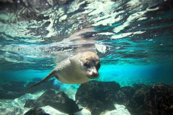 Complete Galapagos Wildlife Cruise - 8 Day Cruise aboard Eric or Letty.Dates 2018: Jun 17 / Jul 1 / Jul 15 / Jul 29 / Aug 12 / Aug 26 / Sept 9 / Sept 23 / Oct 7 / Oct 21 / Nov 4 / Nov 18 / Dec 2 / Dec 16 / Dec 30Starting price: $4501. Per Person