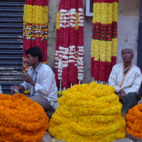 Marigold sourcing in Bangalore flower market