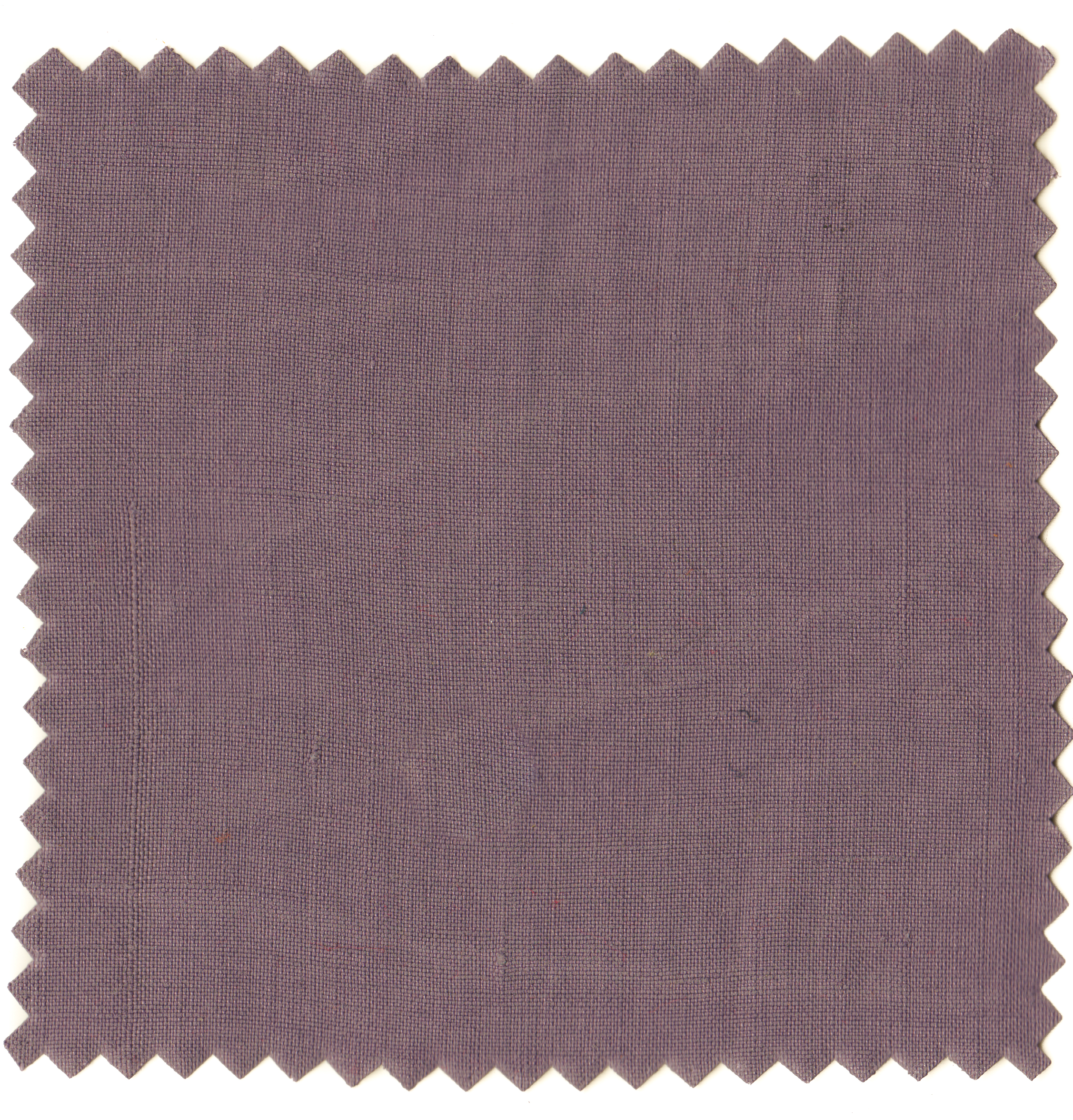 Logwood Purples-4.jpg