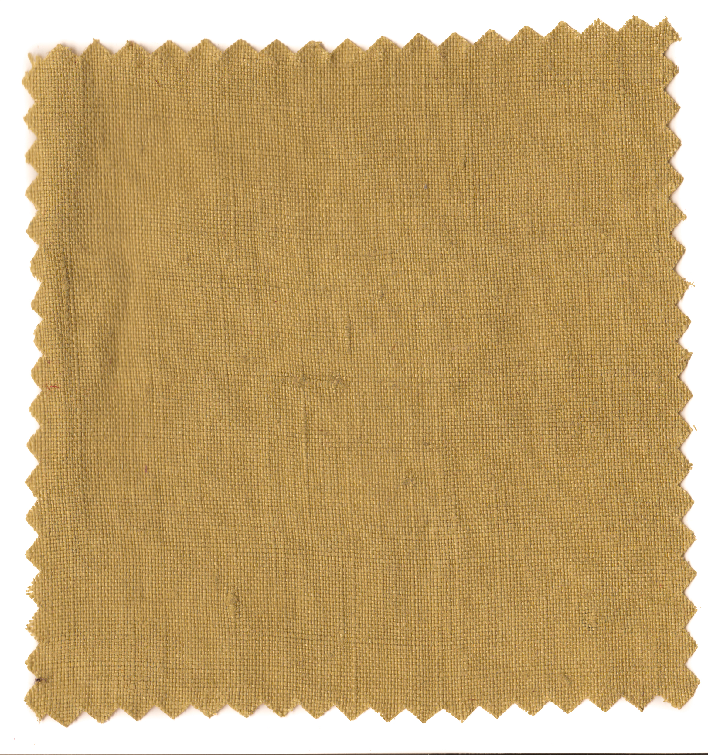 Mustard Greens-5.jpg