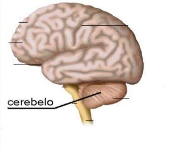 Ejercicios de coordinación cerebral.
