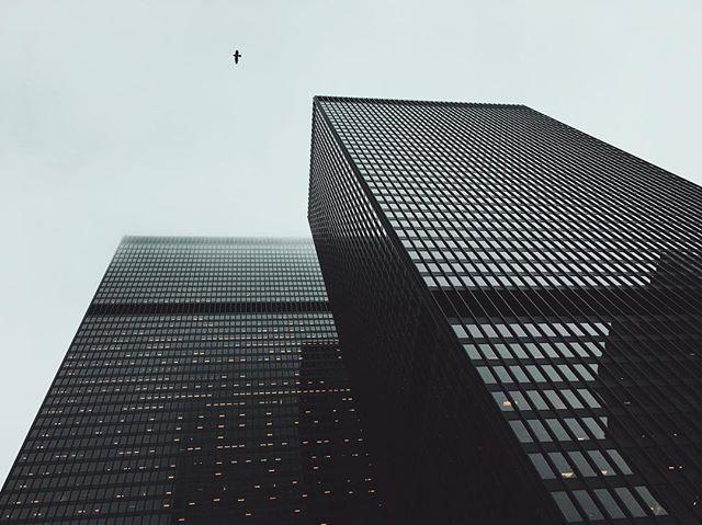 Bird on a grey day.