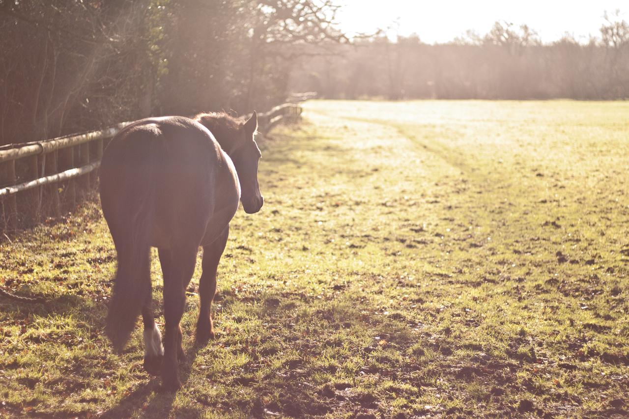 horse_sunset.jpg
