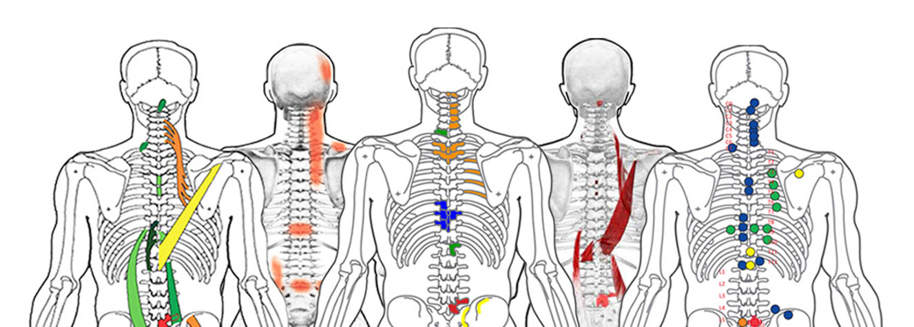 Spinal Reflex Institute, Intl. Charts