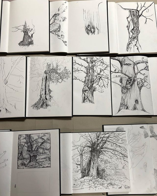 Check out the Drawing & Painting majors' drawings from the chestnut tree grove - each one astonishing and technically masterful in its own way! #lestapies #sketching #chestnuttree #enpleinair #summerartprogram #ardechefrance