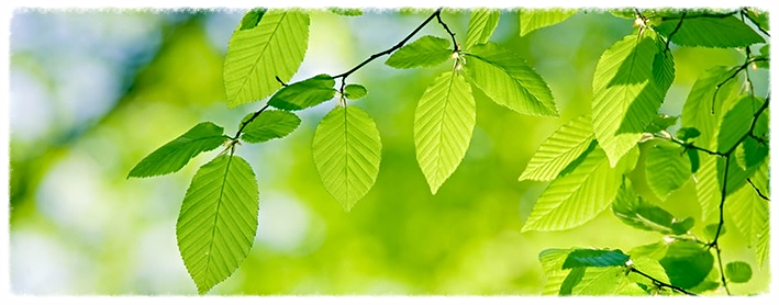 greencompanypharmawebinars.jpg