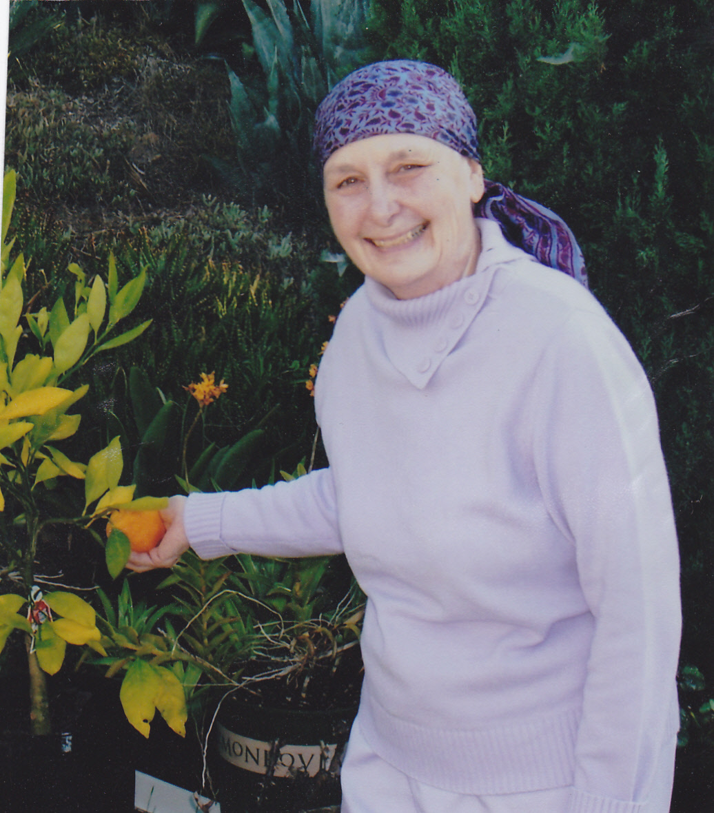 Mary Jo picking pears after completing chemotherapy.