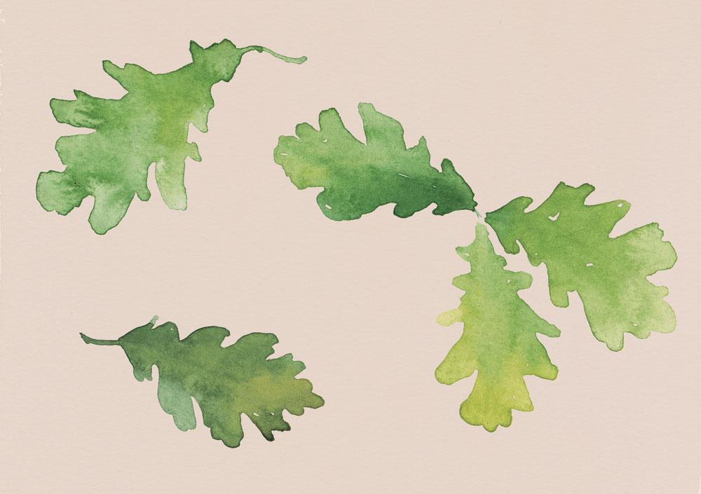 erin-ellis-watercolor-illustration-oak-leaves.jpg