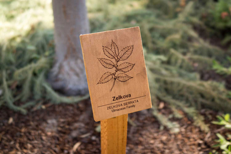 botanical-illustration-identification-signage-Zelkova-serrata-Facebook-Building-20-by-Erin-Ellis-copy.jpg
