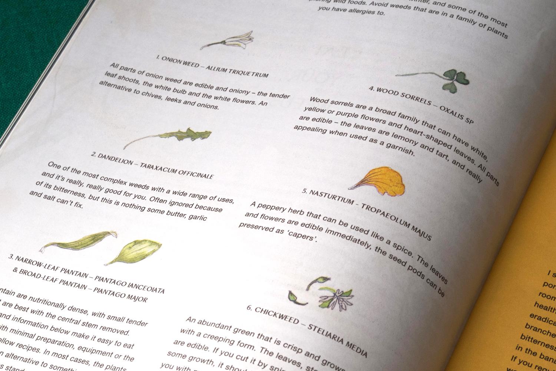 Erin-Ellis-edible-weeds-botanical-illustration-for-Stone-Soup-3.jpg