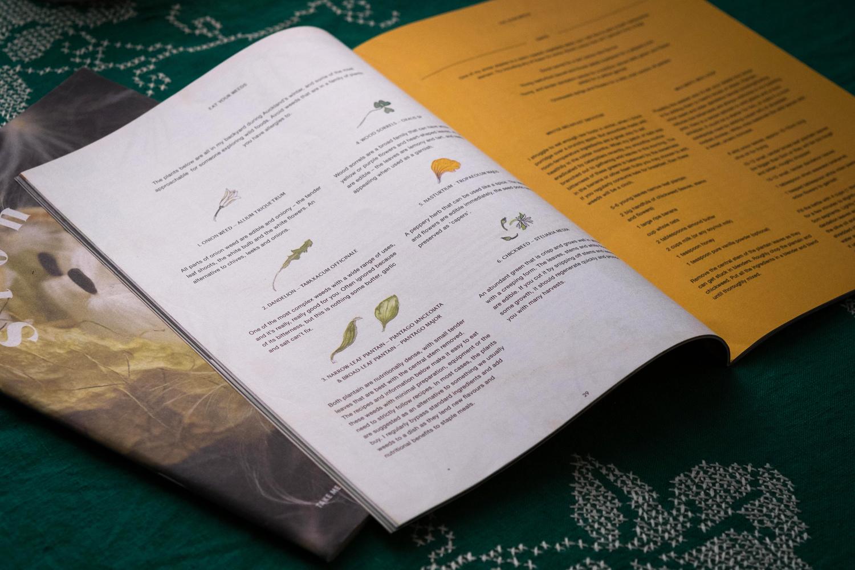 Erin-Ellis-edible-weeds-botanical-illustration-for-Stone-Soup-2.jpg
