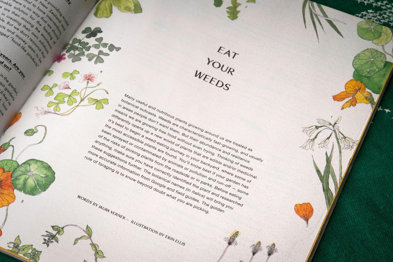 Erin-Ellis-edible-weeds-botanical-illustration-for-Stone-Soup-4.jpg