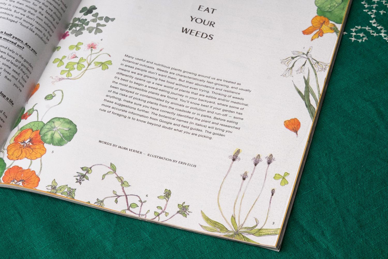Erin-Ellis-edible-weeds-botanical-illustration-for-Stone-Soup-5.jpg