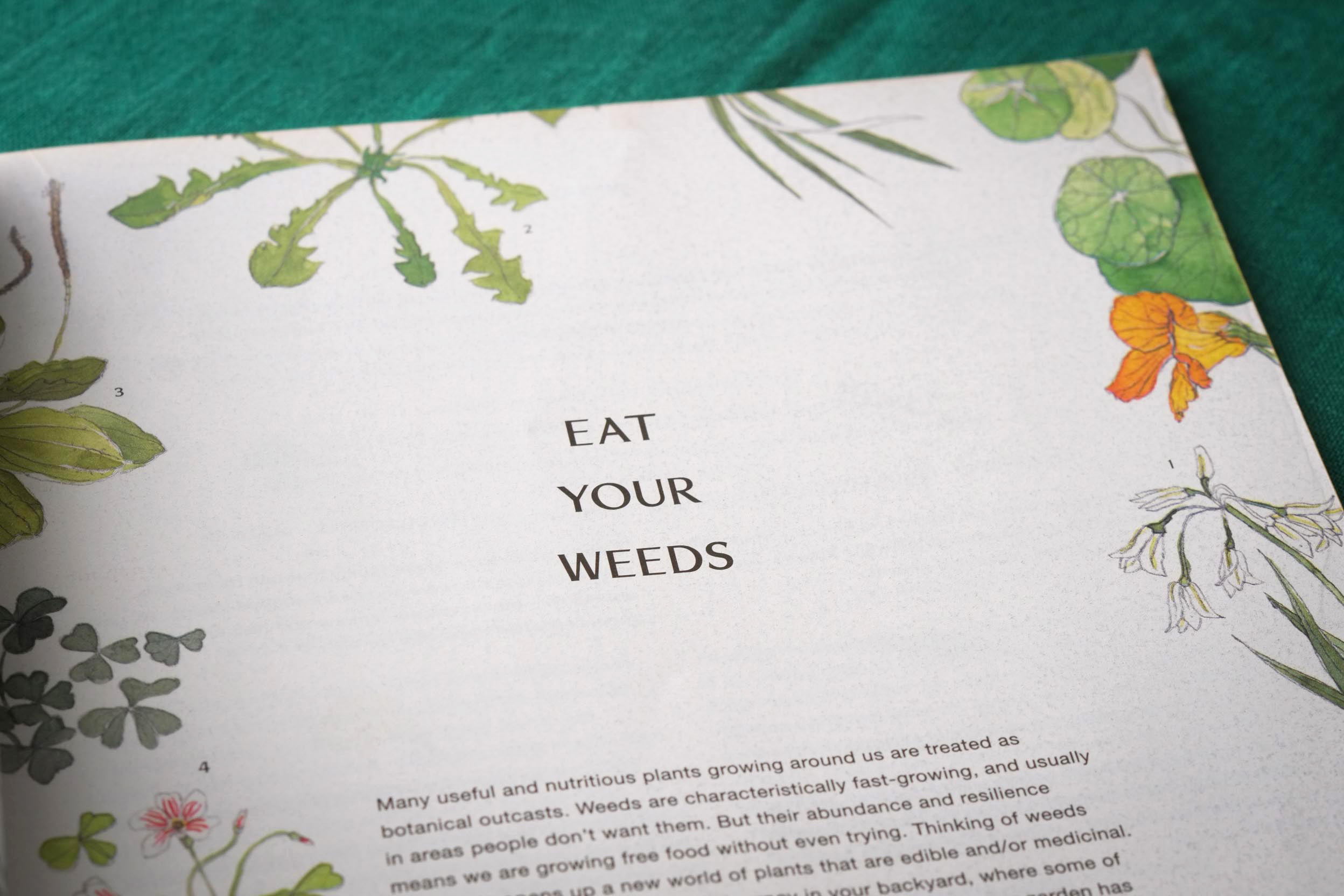 Erin-Ellis-edible-weeds-botanical-illustration-for-Stone-Soup-9.jpg