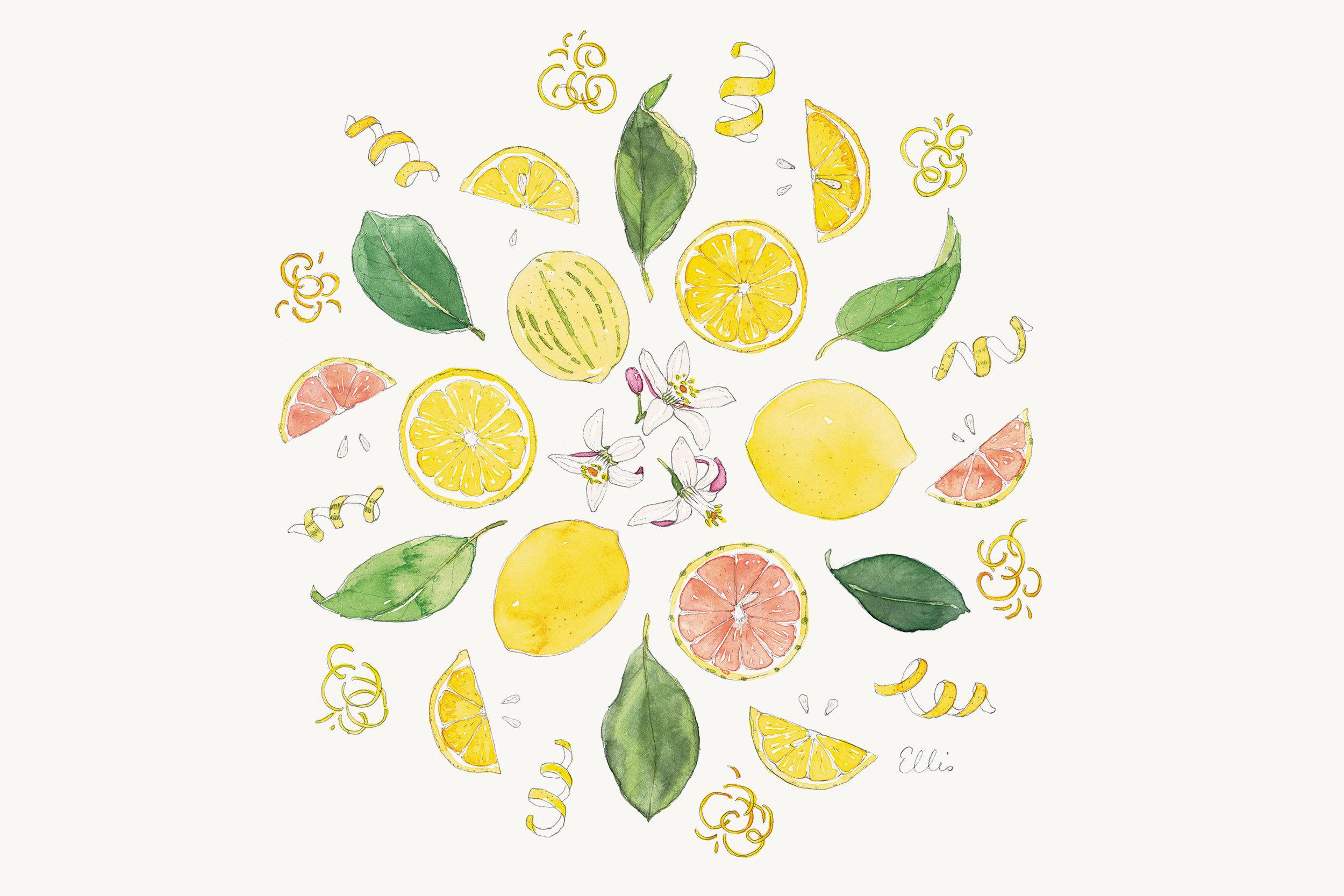 Lemons-mandala-illustration-by-Erin-Ellis---Tampa-Bay-Times-Taste.jpg