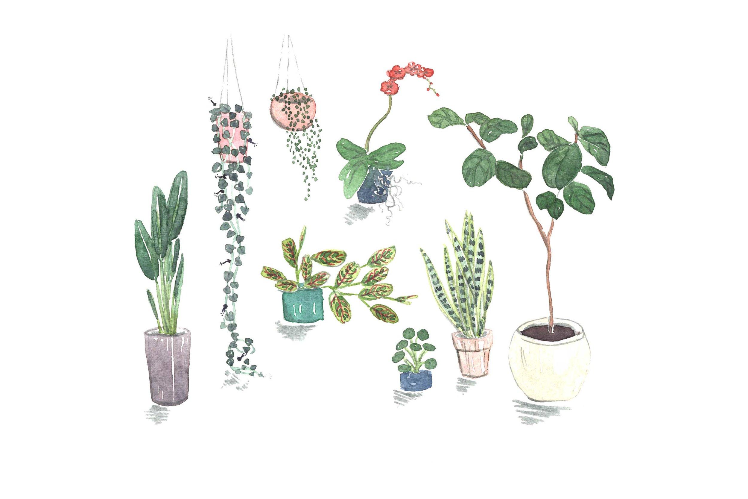 erin-ellis_lifestyle_watercolor_illustrations_houseplants_well+good.jpg