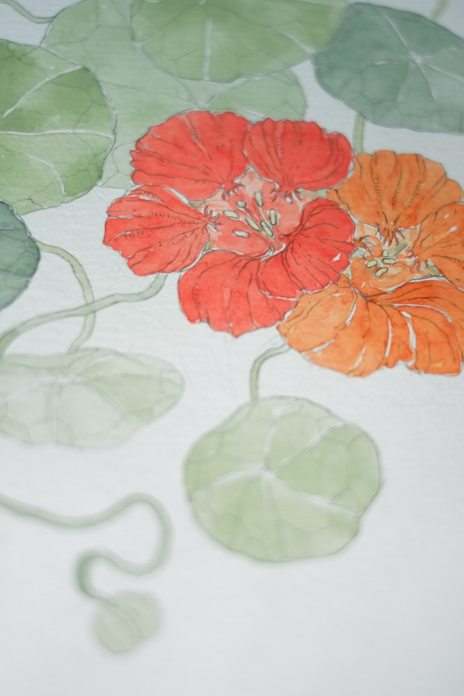 Erin Ellis_botanical flowering vines watercolor drawings-24.jpg