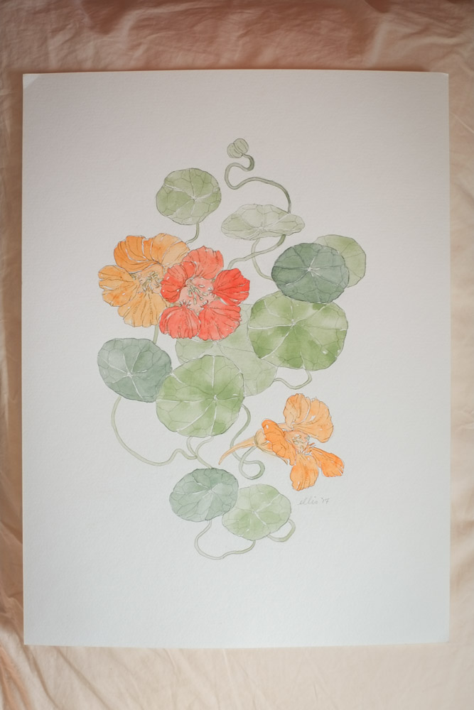 Erin Ellis_botanical flowering vines watercolor drawings-13-2.jpg
