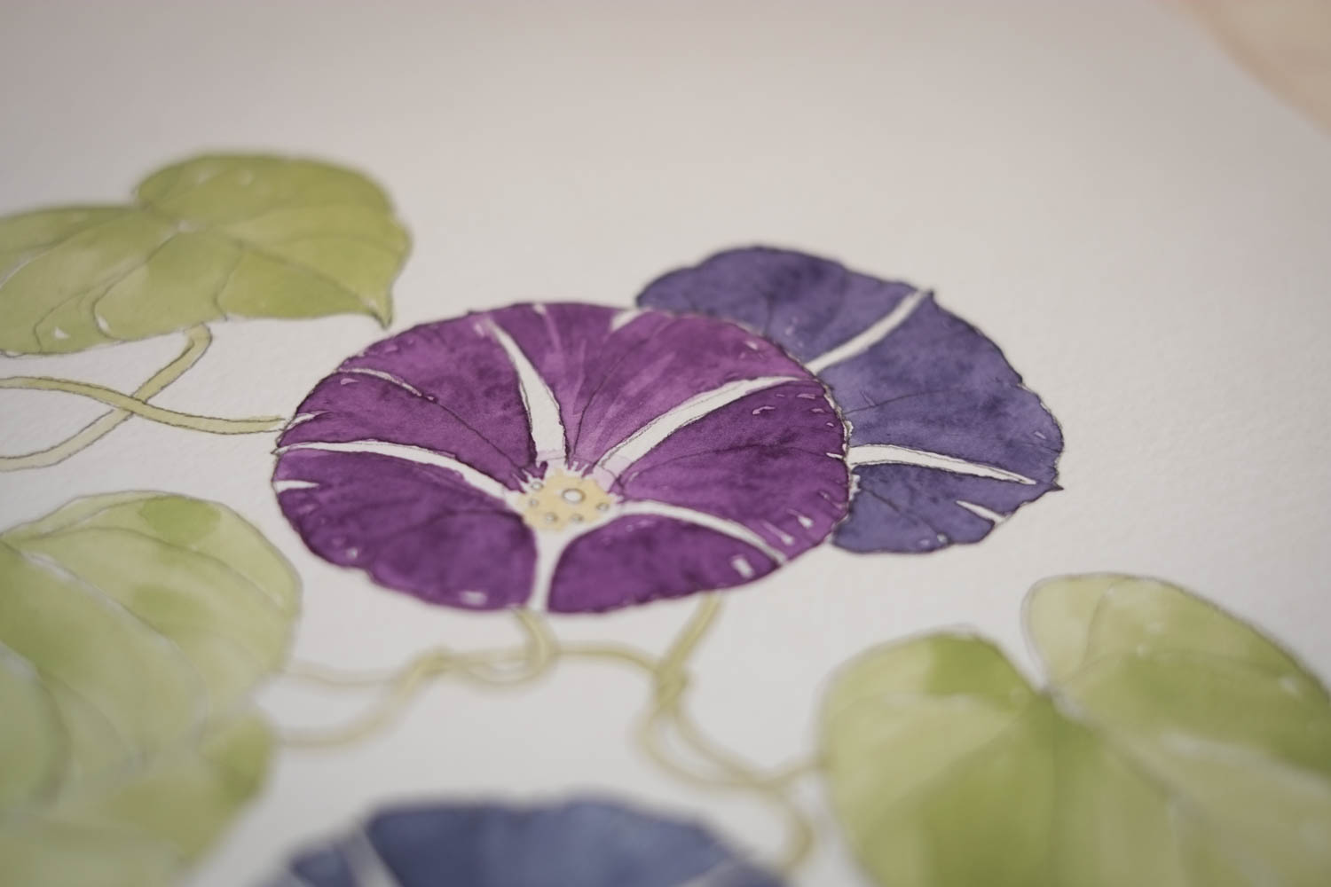 Erin Ellis_botanical flowering vines watercolor drawings-16-2.jpg
