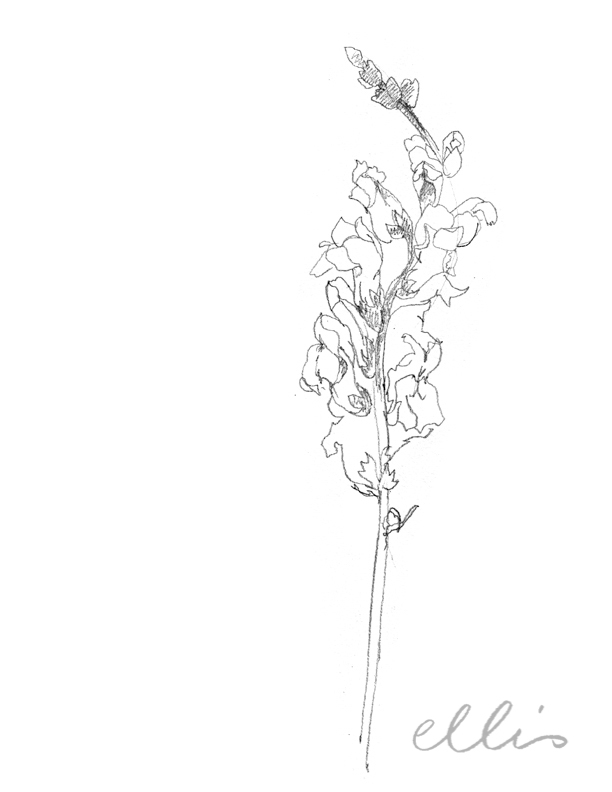 Erin Ellis_100 days project botanical drawings_2013-65.jpg