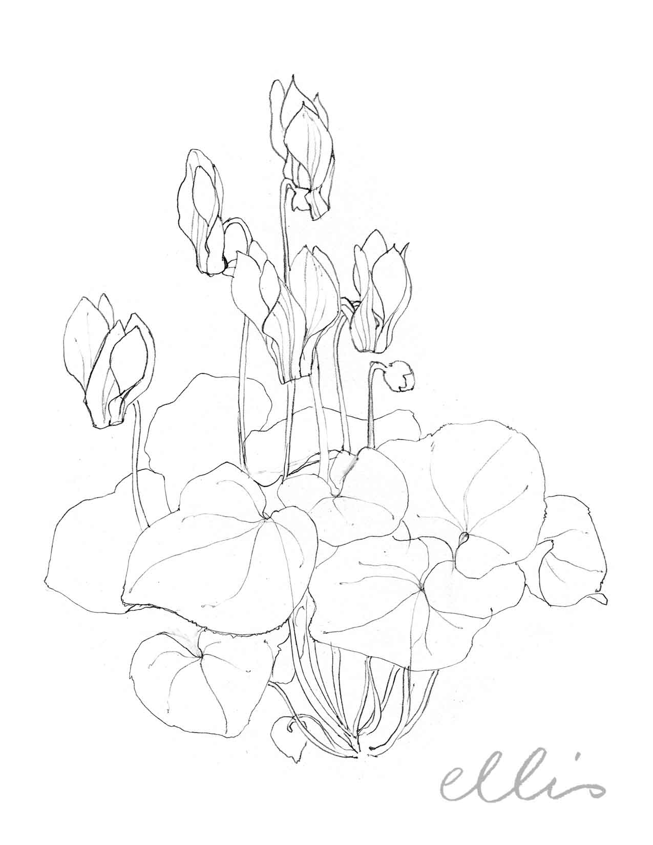Erin Ellis_100 days project botanical drawings_2013-82.jpg