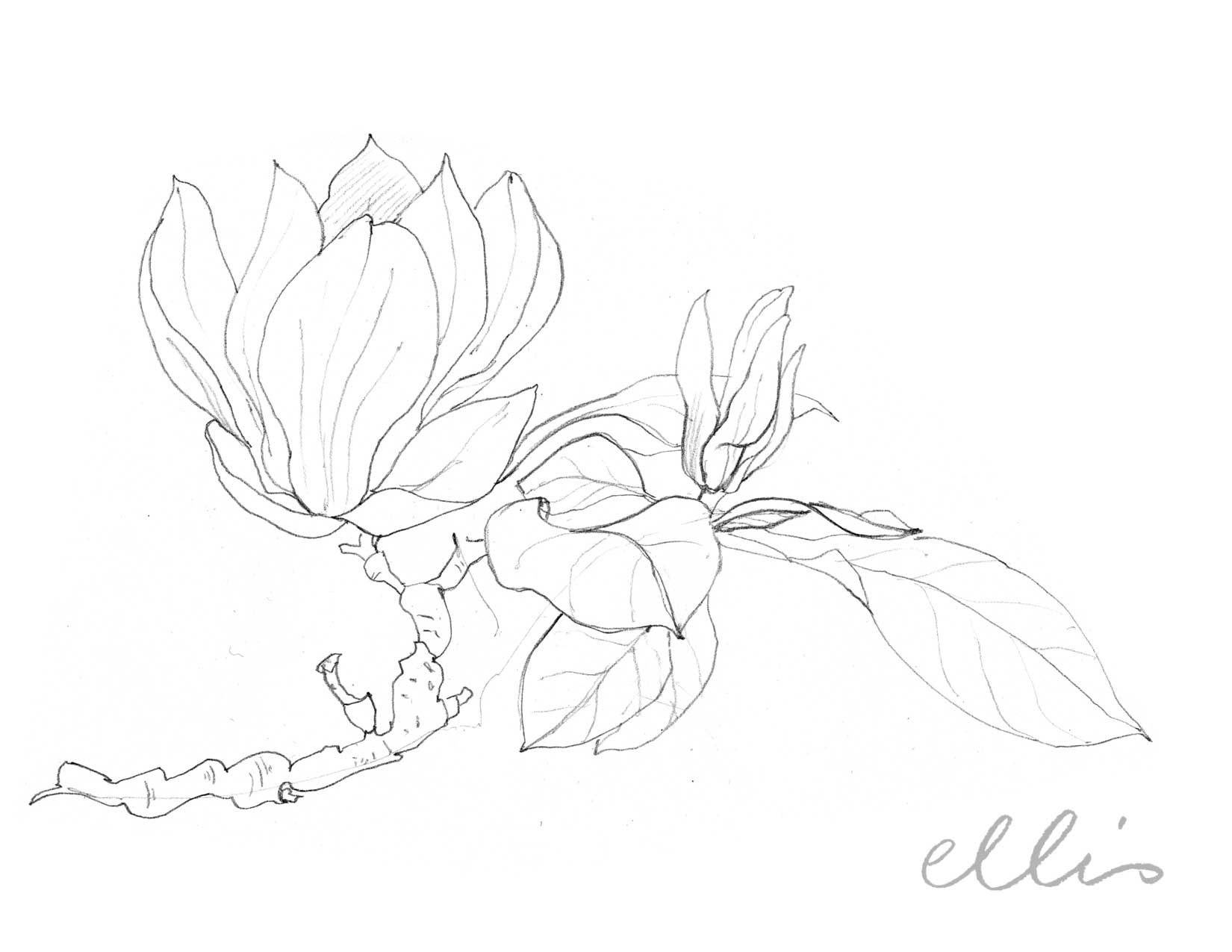 Erin Ellis_100 days project botanical drawings_2013-94.jpg