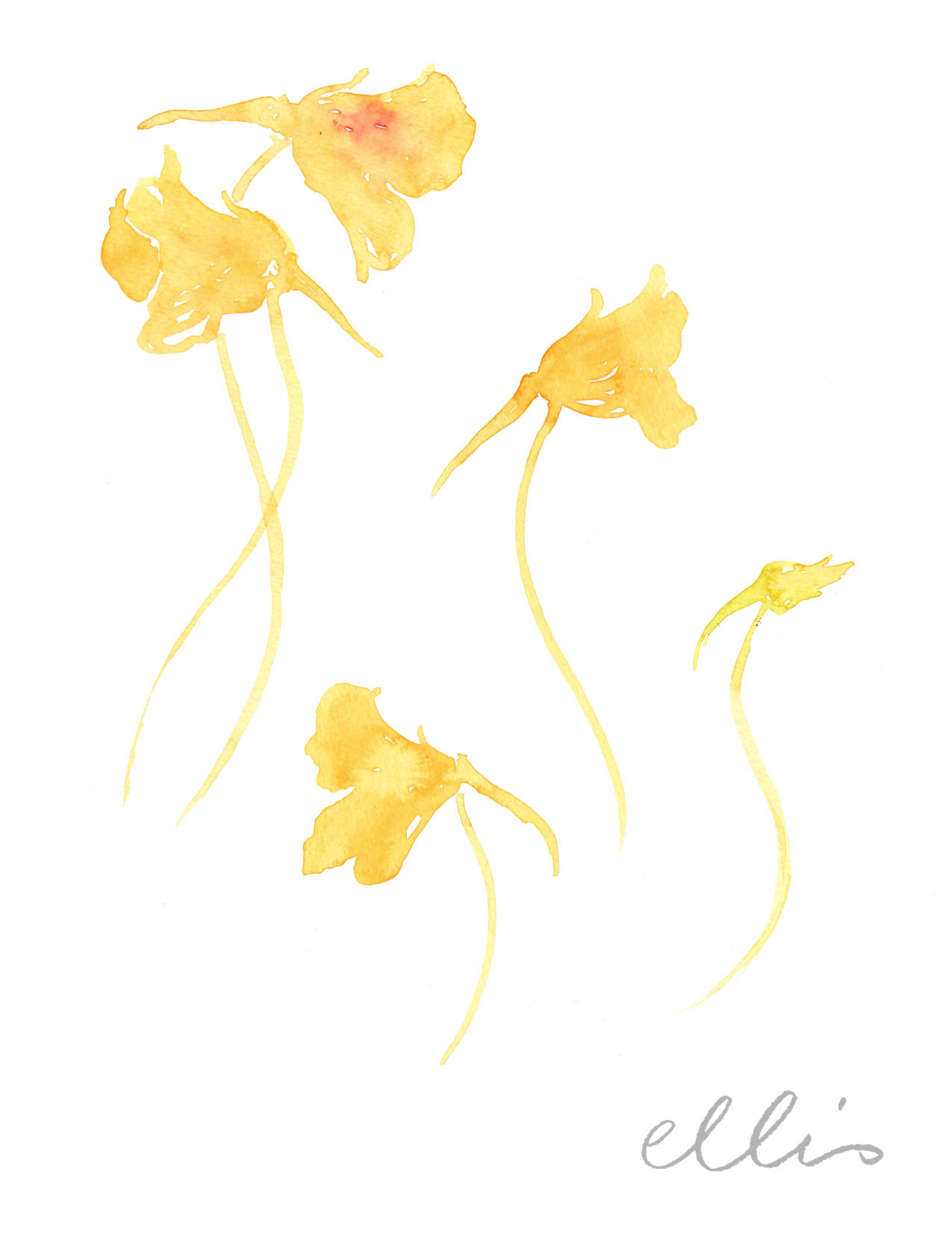 Erin Ellis_100 days project botanical drawings_2013-99.jpg