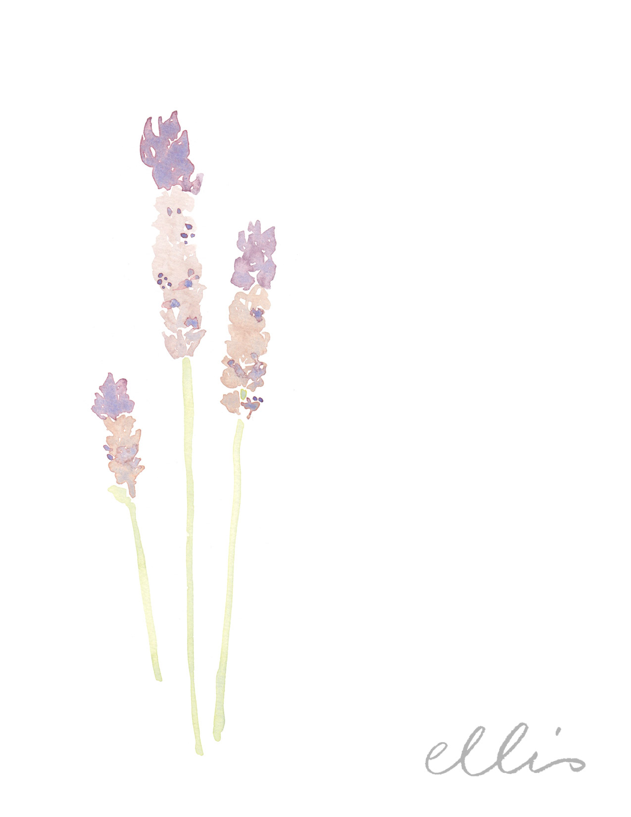 Erin Ellis_100 days project botanical drawings_2013-100.jpg