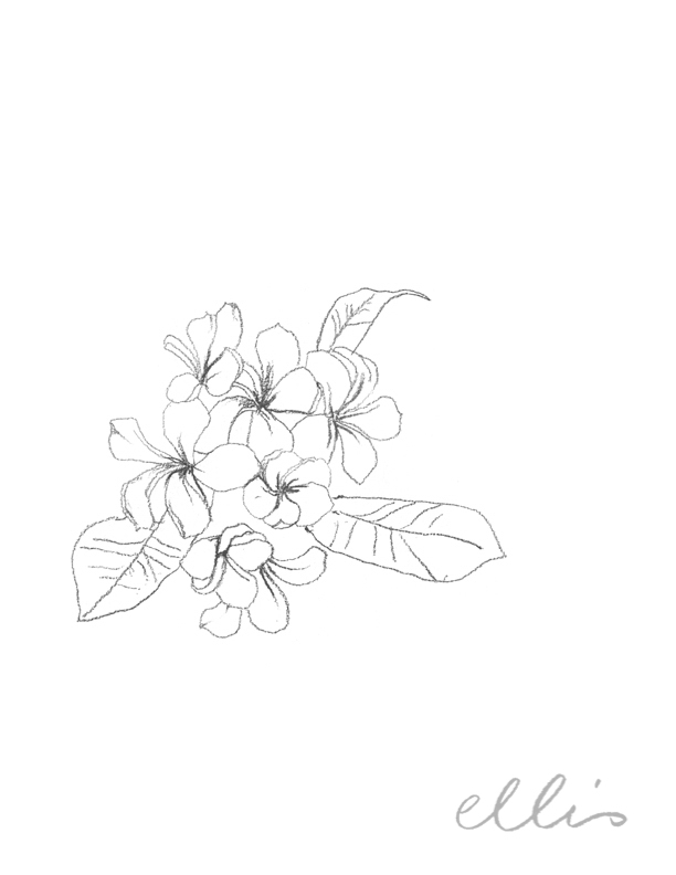 Erin Ellis_100 days project botanical drawings_2013-5.jpg