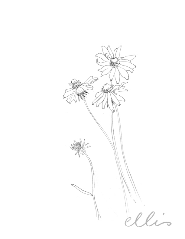 Erin Ellis_100 days project botanical drawings_2013-14.jpg