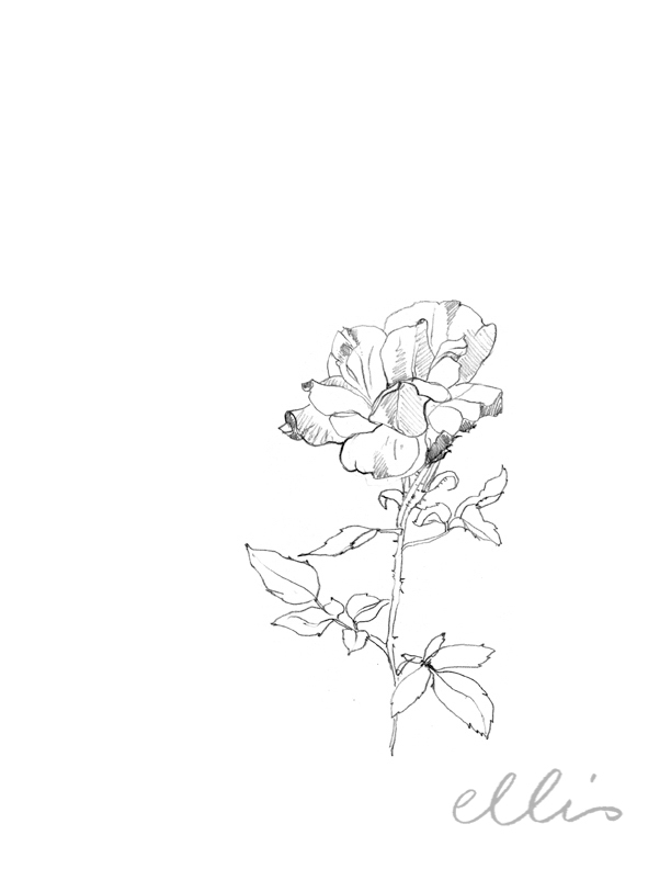 Erin Ellis_100 days project botanical drawings_2013-16.jpg