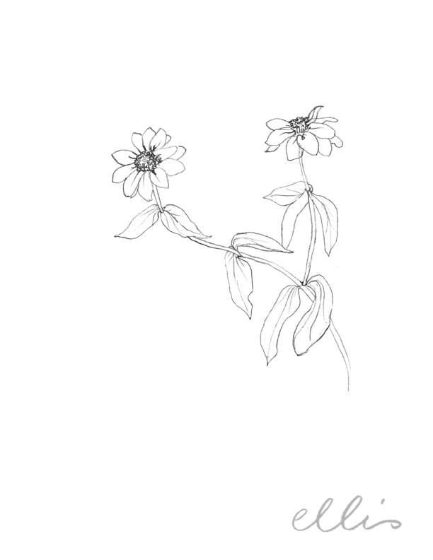 Erin Ellis_100 days project botanical drawings_2013-18.jpg
