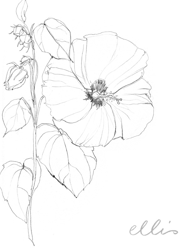 Erin Ellis_100 days project botanical drawings_2013-32.jpg