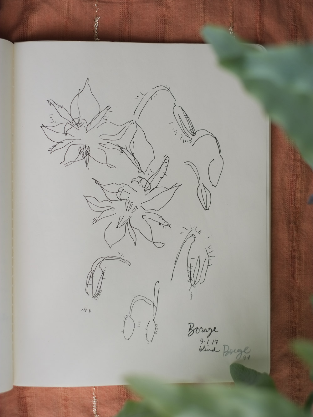 Erin_Ellis_daily_botanical_blind_drawings_sept_2017.jpg-1.jpg