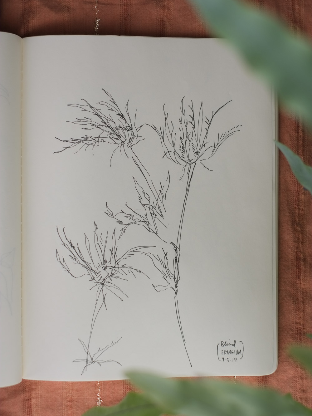 Erin_Ellis_daily_botanical_blind_drawings_sept_2017.jpg-5.jpg
