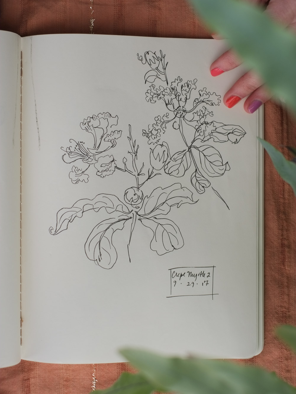 Erin_Ellis_daily_botanical_blind_drawings_sept_2017.jpg-8.jpg