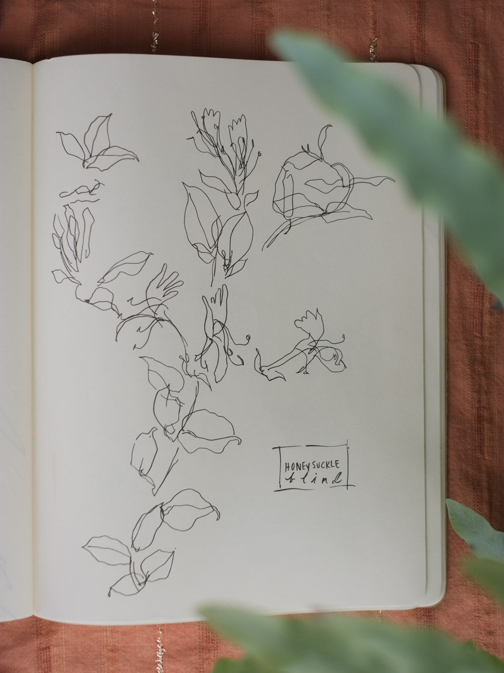 Erin_Ellis_daily_botanical_blind_drawings_sept_2017.jpg-17.jpg