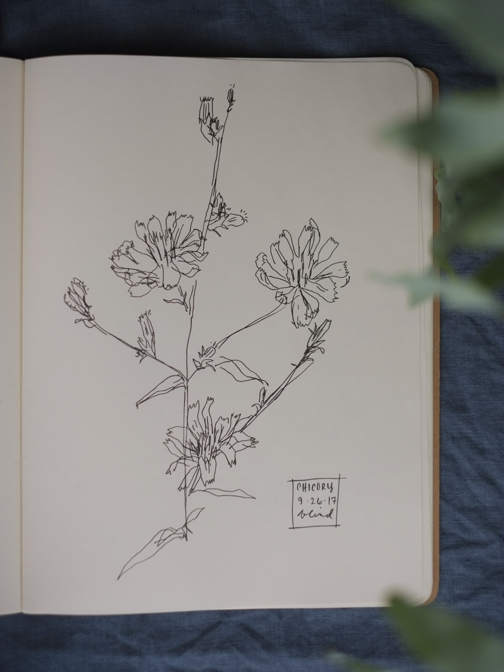Erin_Ellis_daily_botanical_blind_drawings_sept_2017.jpg-30.jpg