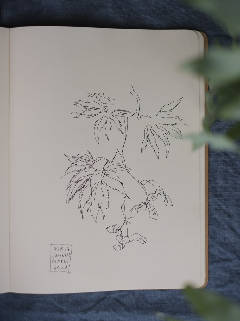 Erin_Ellis_daily_botanical_blind_drawings_sept_2017.jpg-32.jpg