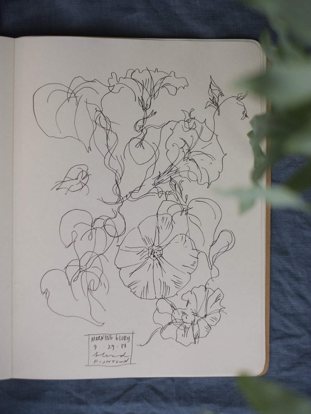 Erin_Ellis_daily_botanical_blind_drawings_sept_2017.jpg-34.jpg