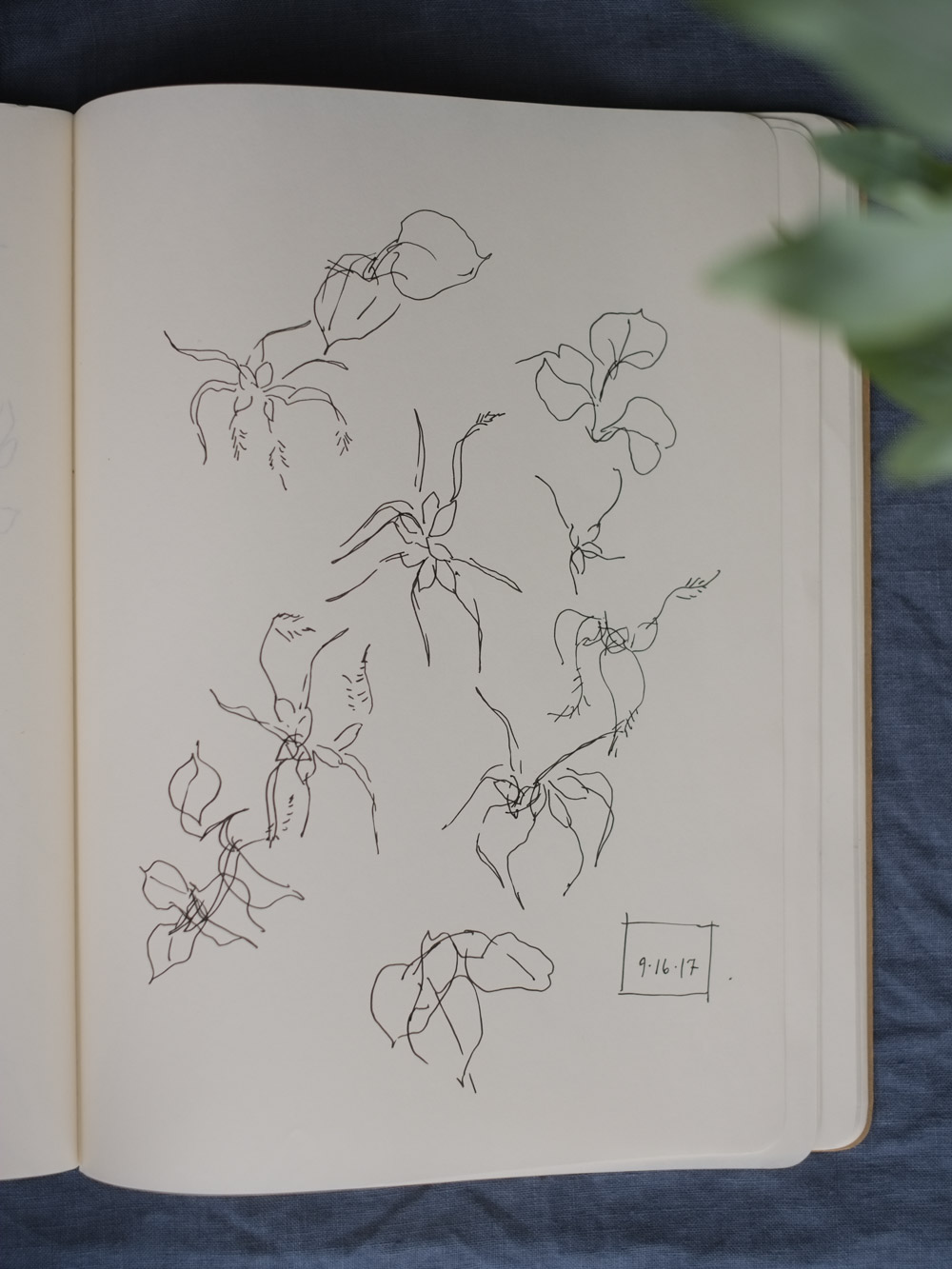 Erin_Ellis_daily_botanical_blind_drawings_sept_2017.jpg-20.jpg