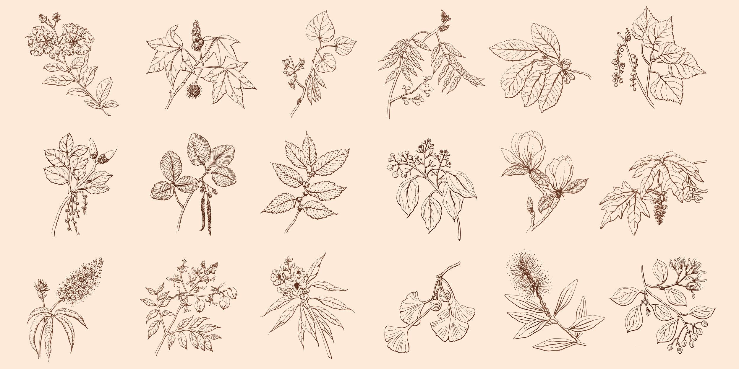 erin-ellis_botanical_signage_facebook_landscape_18_illustrations.jpg