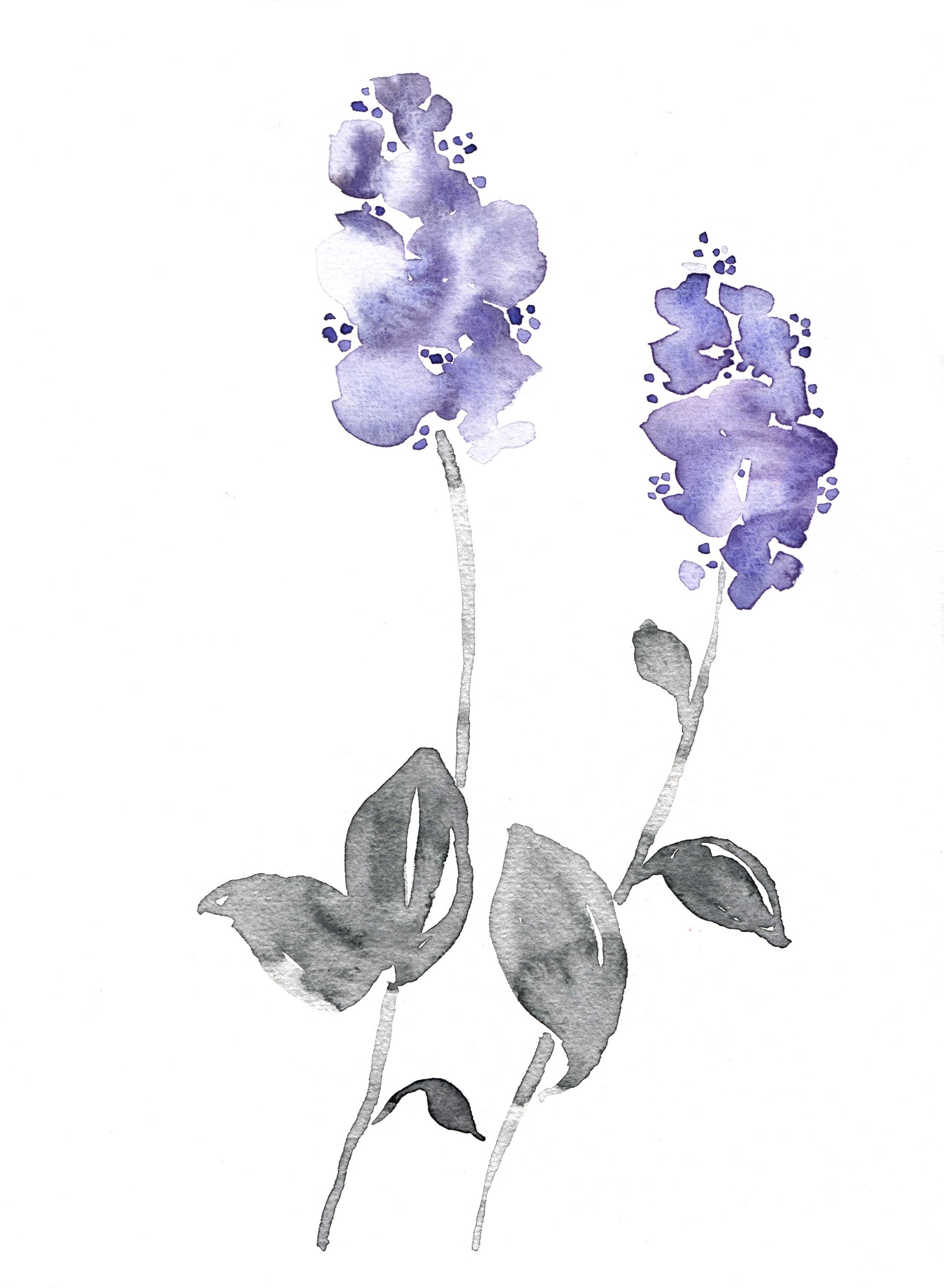 erin-ellis_botanical_floral_watercolor_ceanothus.jpg