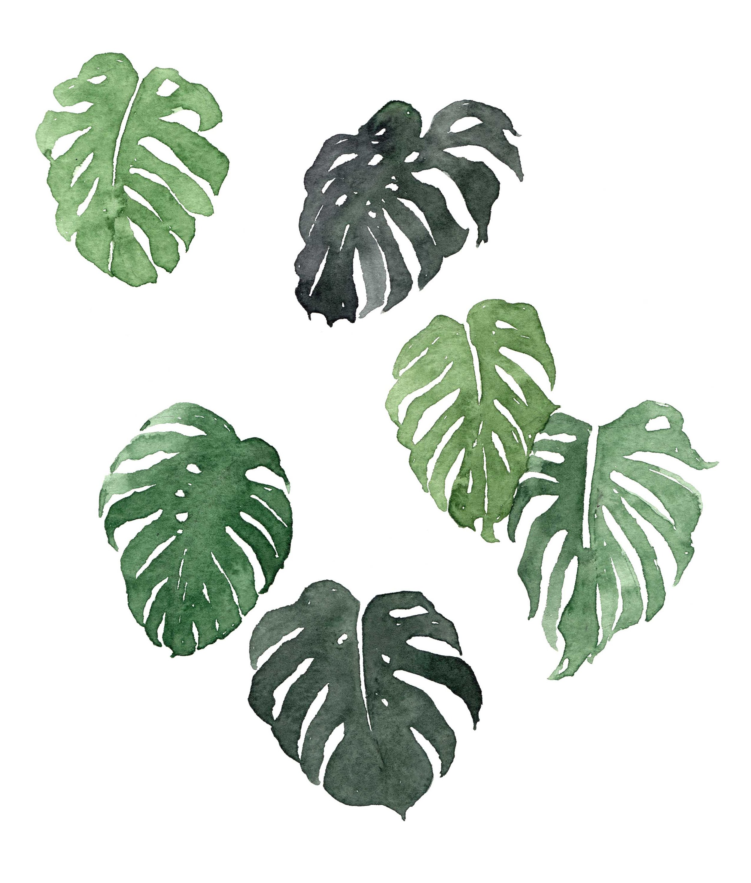 erin-ellis_botanical_watercolor_monstera.jpg